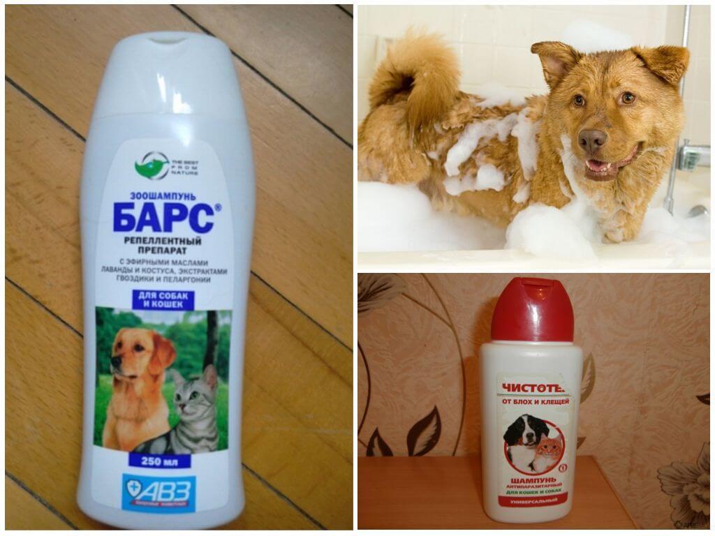 Как вывести блох у собаки — специальные и народные средства, что делать с беременными и кормящими