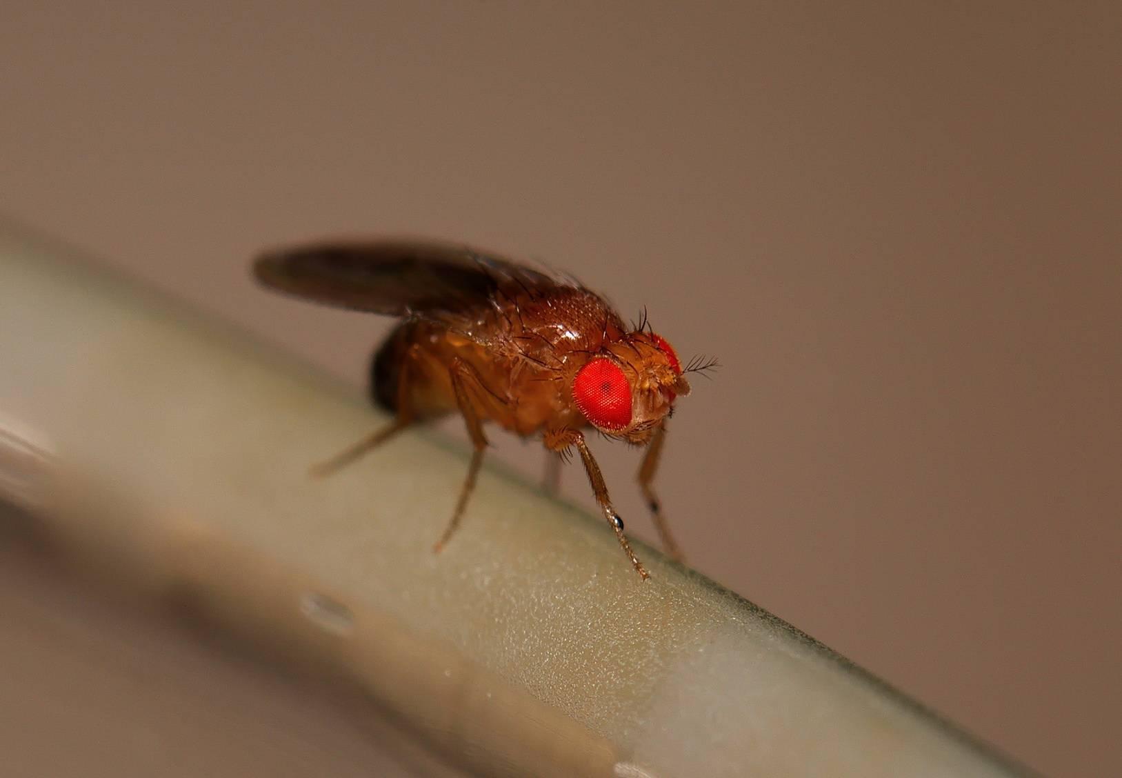 Откуда зимой берутся мухи в доме и как избавиться от мух и от мошек?