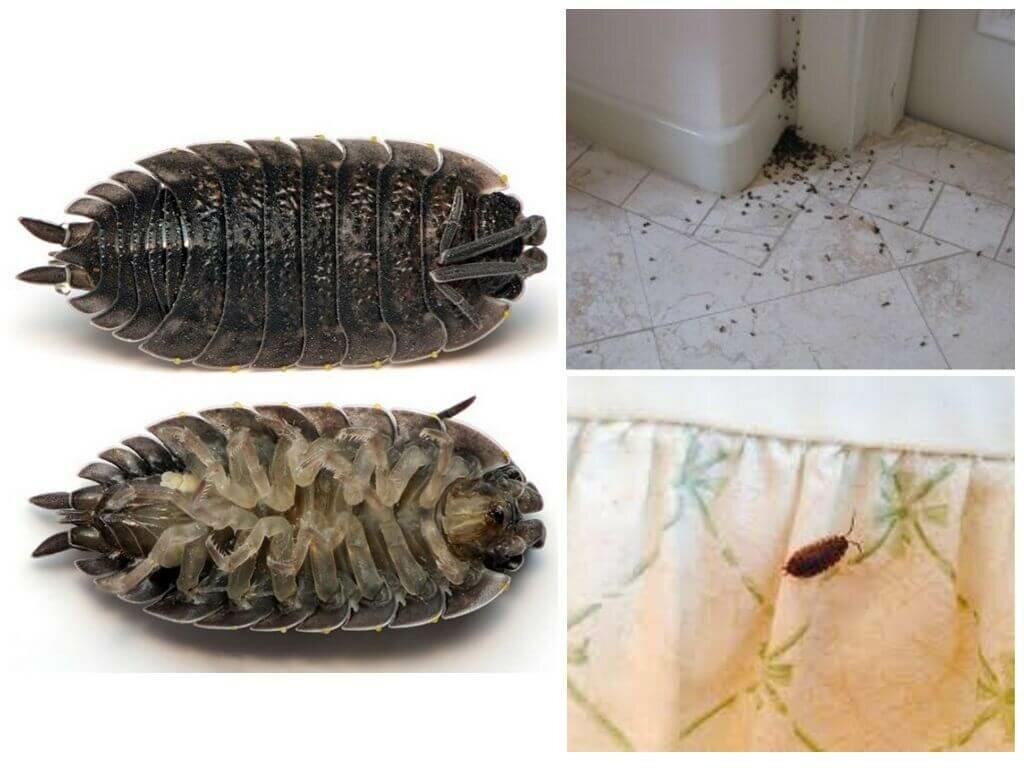 Как избавиться от мокриц в квартире в домашних условиях самостоятельно