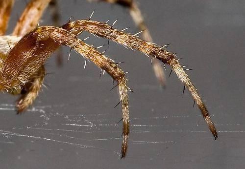 Посмотрим, сколько лап у паука и как он ими пользуется