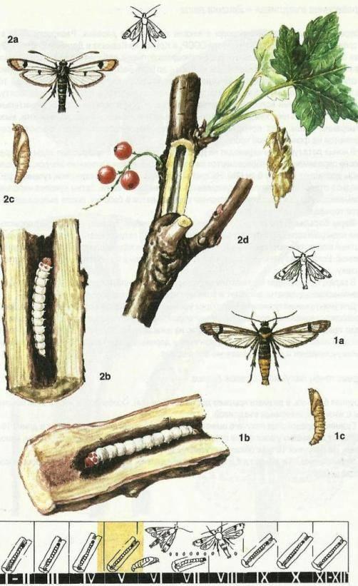 А. п. чехов. вишневый сад. текст произведения. действие третье