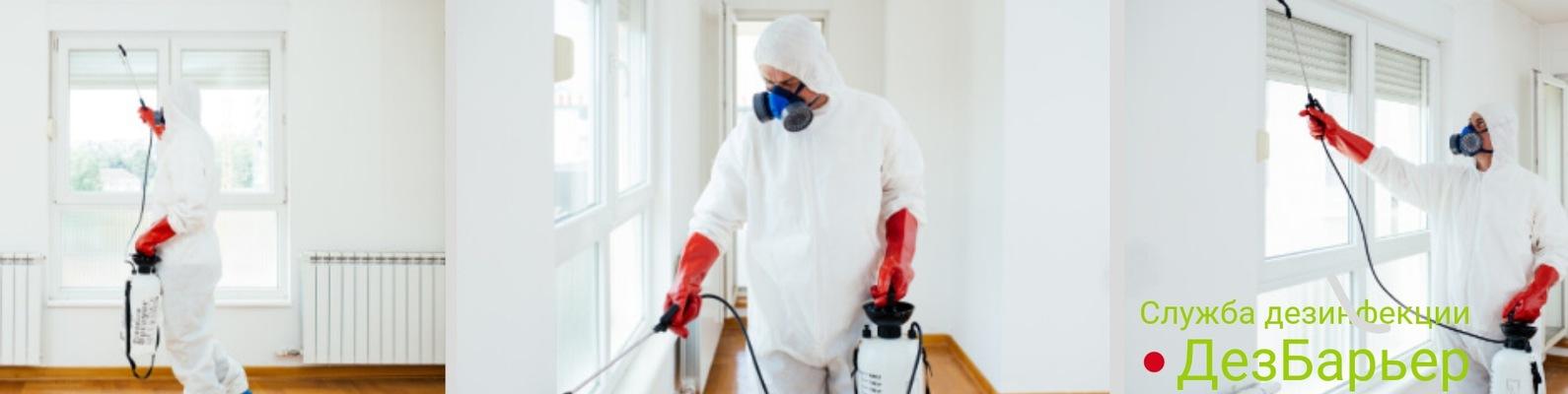 Обработка от блох: эффективная очистка квартир и жилых помещений