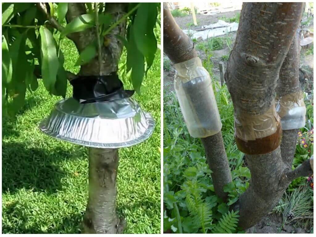 Клеевой ловчий пояс для деревьев. ловушки для муравьев на деревьях своими руками