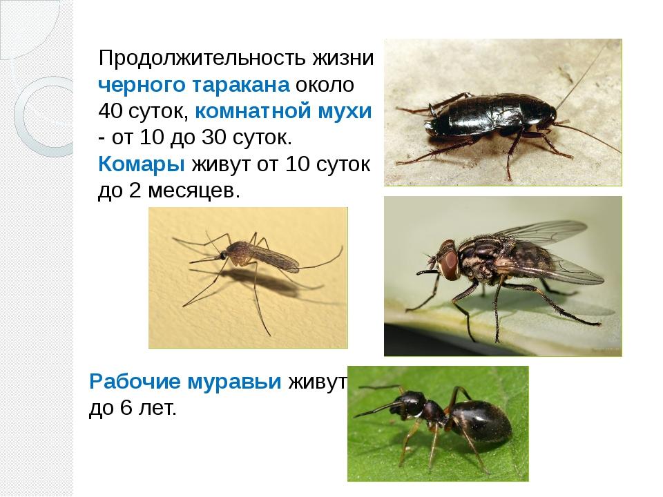 Сколько живут мухи, сколько у них глаз и лап, как размножаются обыкновенные мухи?