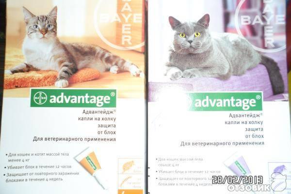 """Инструкция препарата """"адвантейдж"""" для кошек – правила использования капель, показания и первая помощь при отравлении средством"""