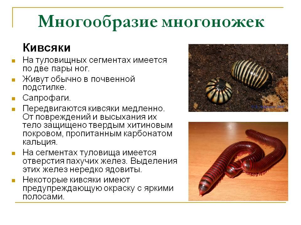 Полиподиум или многоножка (polypódium). уход дома, размножение. | floplants. о комнатных растениях