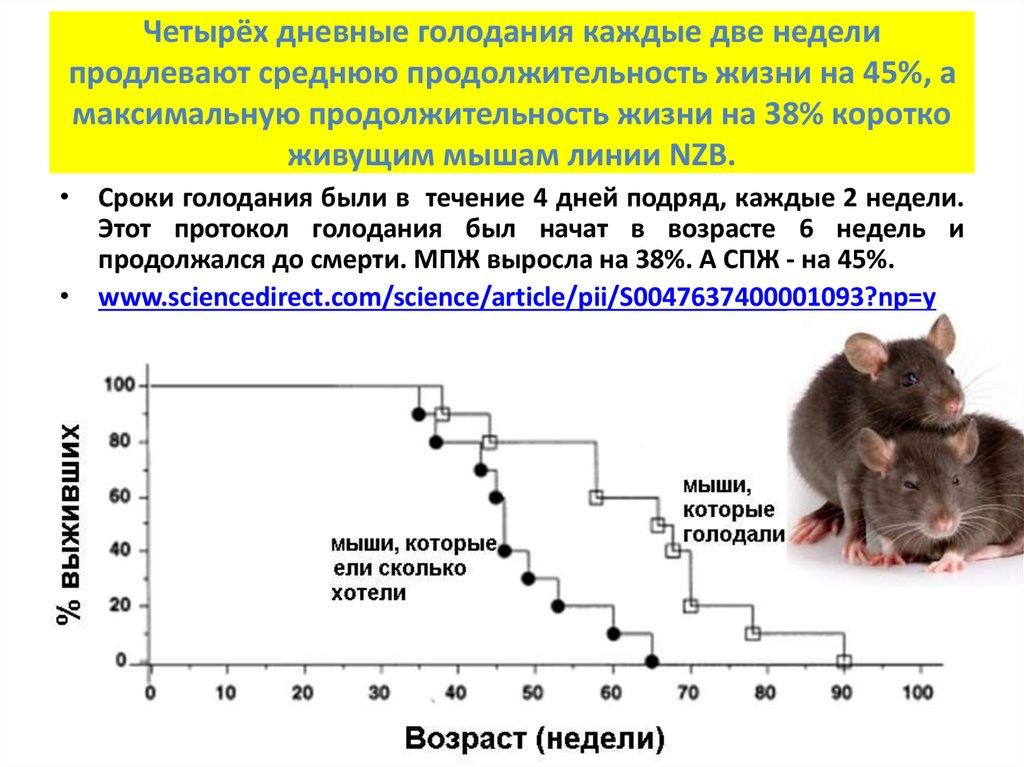 Сколько живут дикие крысы без воды и еды, продолжительность жизни в природе