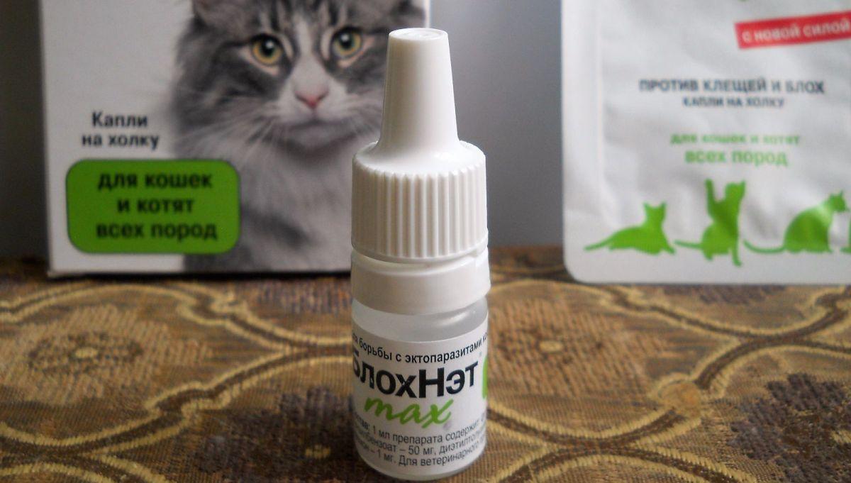 Все о каплях блохнэт для кошки: способ применения препарата и дозировки