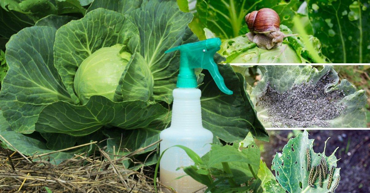 Борьба с тлей народными средствами. 16 народных средства против тли на садовом участке. | красивый дом и сад