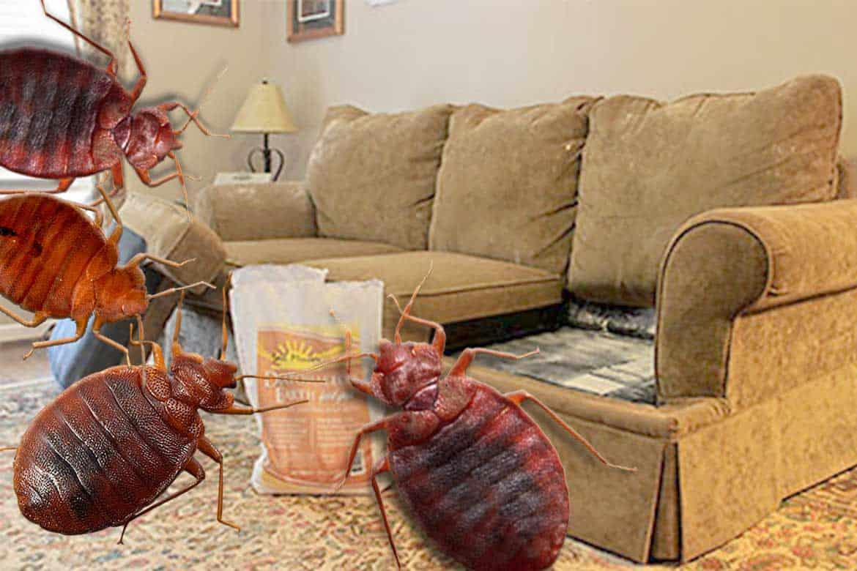 Как вывести клопов из дивана | самостоятельно в домашних условиях