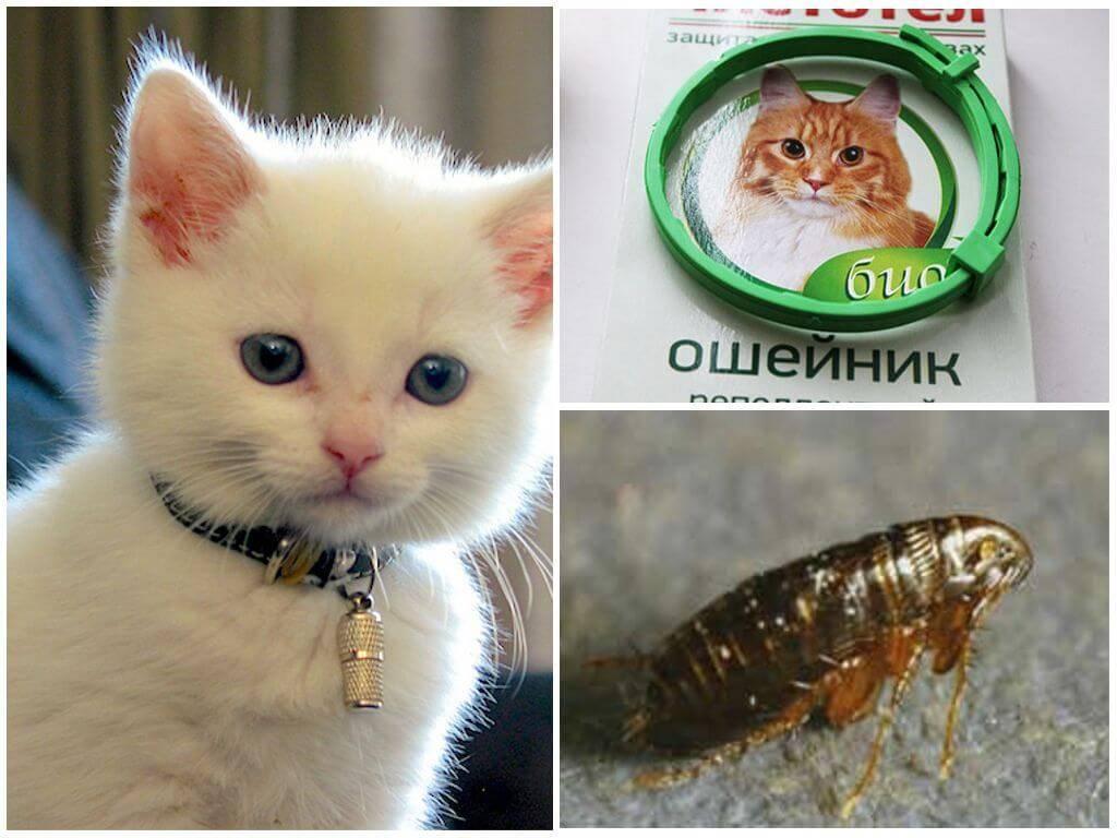 Ошейник от блох для кошек — отзывы про применение