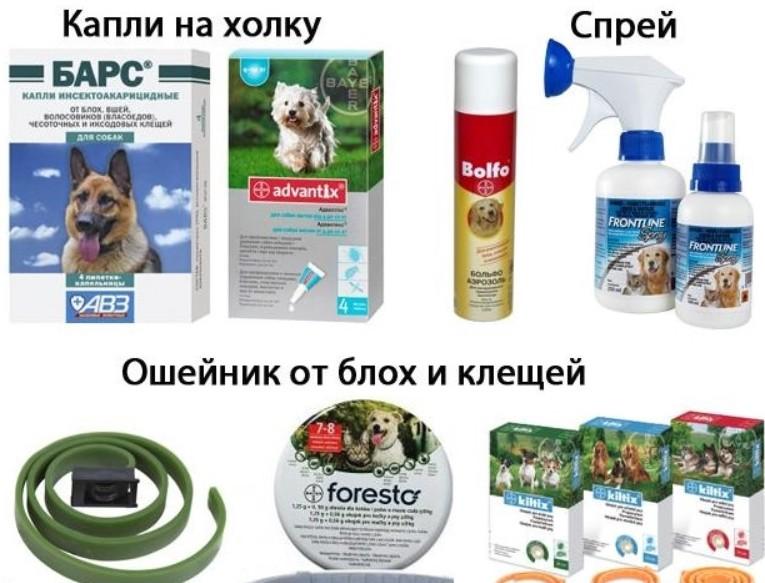 Как защитить собаку от клещей | народными средствами, на даче и природе
