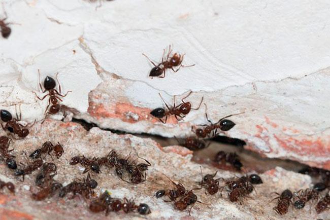 Что едят муравьи в домашних условиях и в природе?