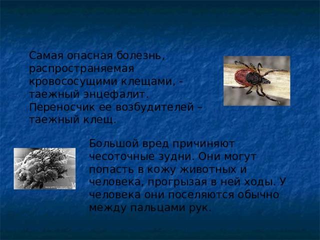 Клещ – описание, виды, где обитают, чем питаются, фото