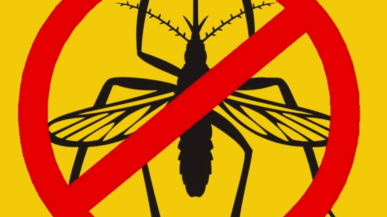 Звук, отпугивающий комаров: виды ультразвуковых отпугивателей, популярные средства