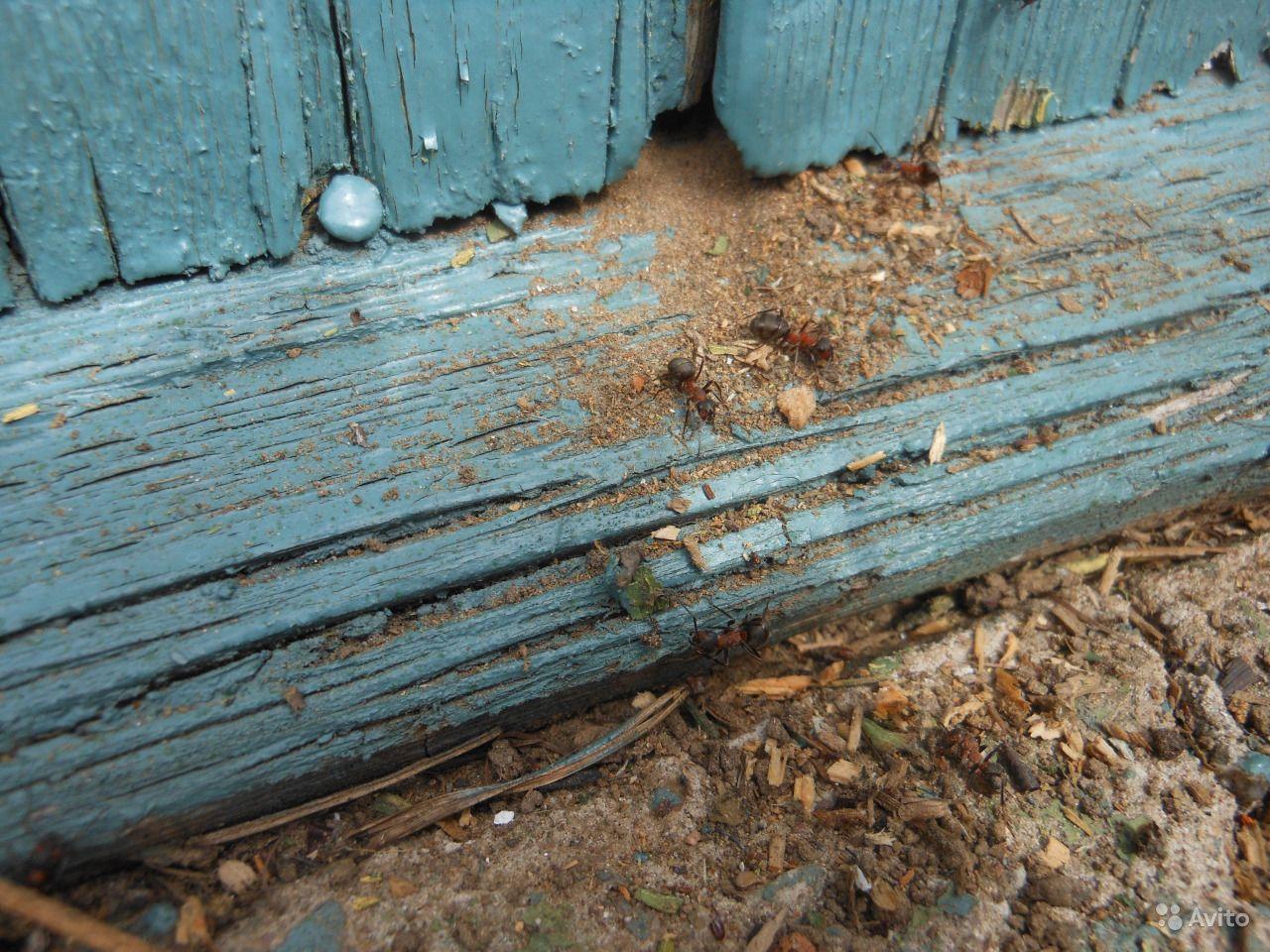 Как избавиться от муравьев в квартире: рассматриваем способы борьбы