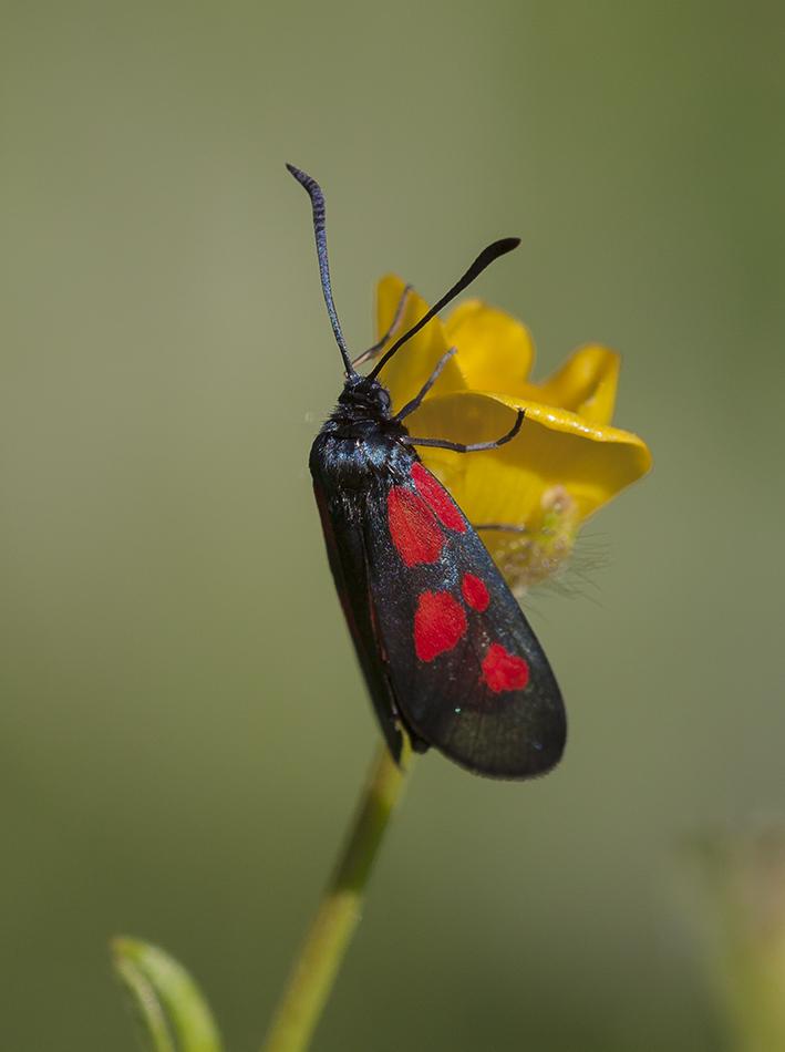 Лепидоптерофобия - боязнь бабочек: симптомы и причины появления