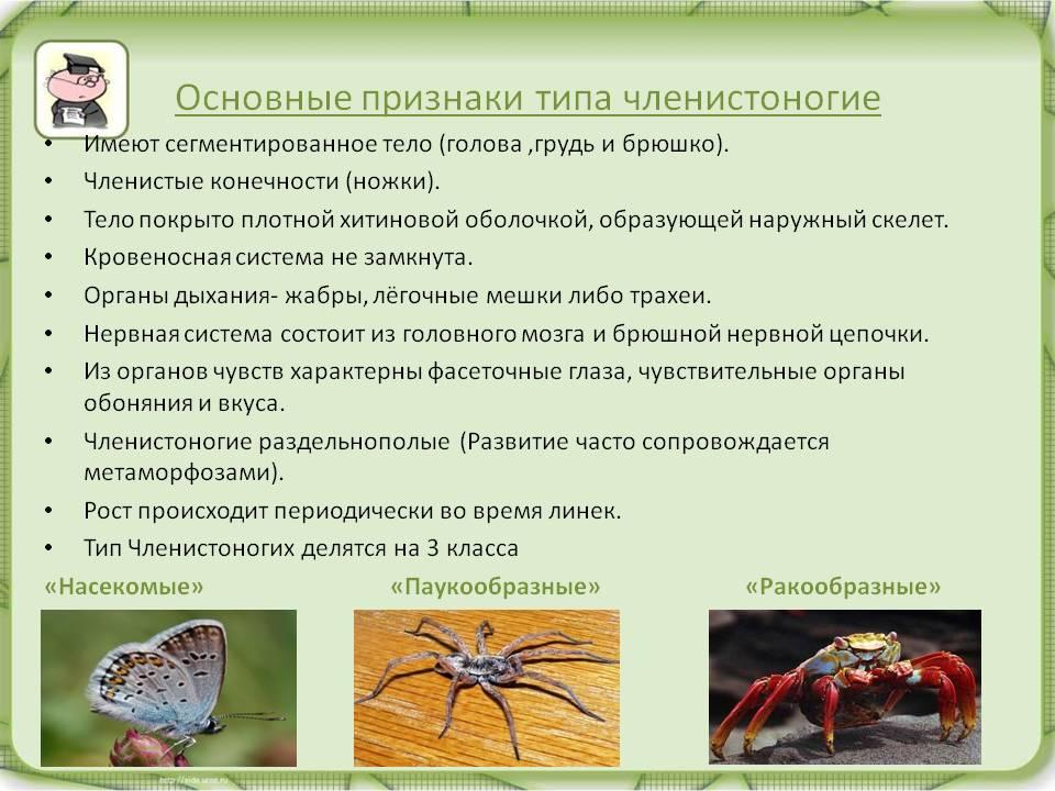 Класс паукообразные. отряды: пауки, скорпионы и клещи. строение и размножение паука-крестовика | биология