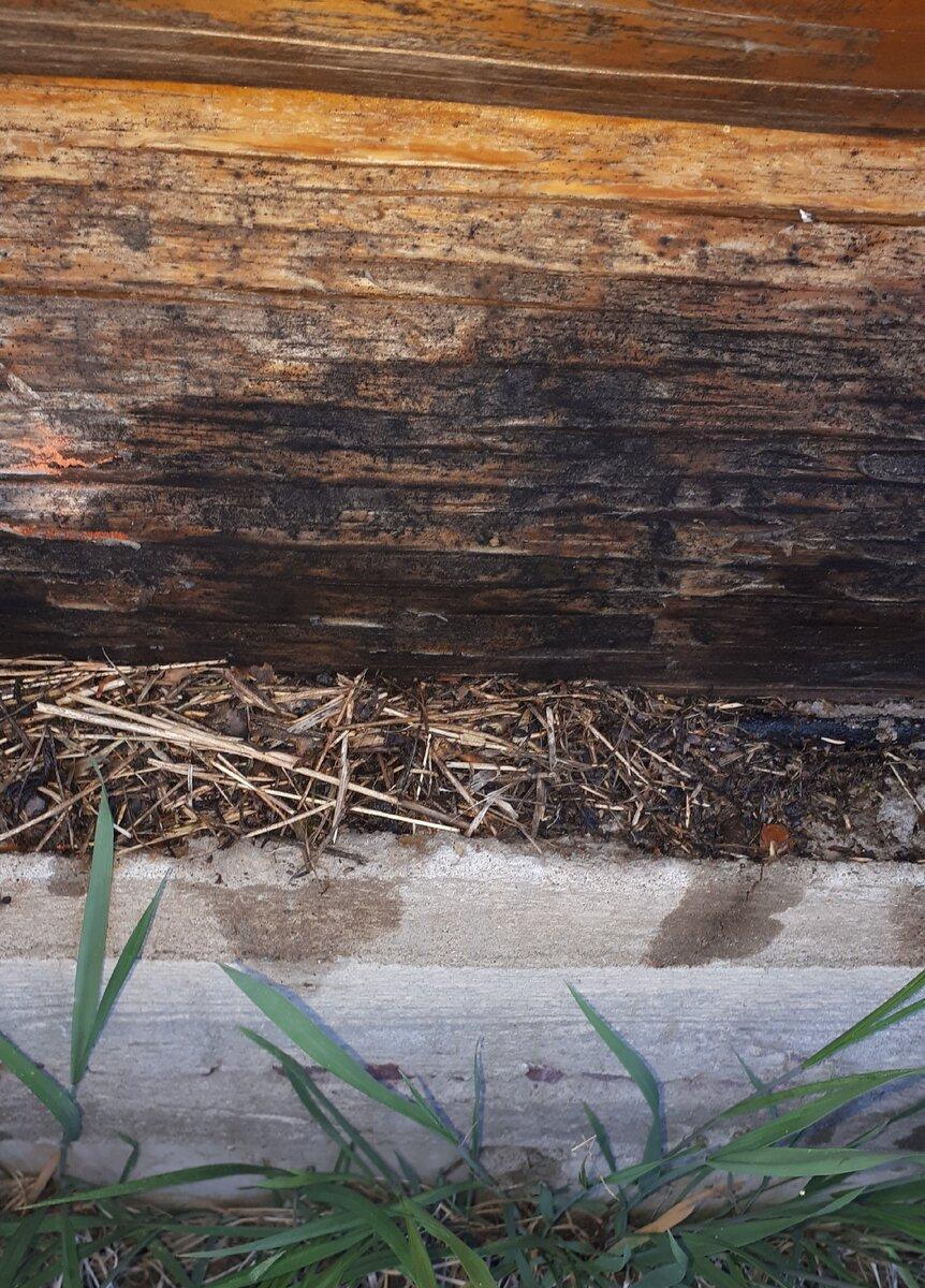 Как навсегда избавиться от муравьёв в теплице: народные средства борьбы и химия