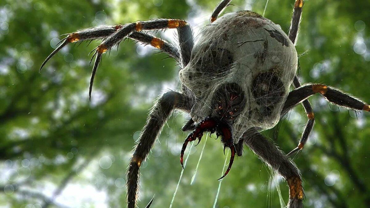 24 самых необычных паука в мире
