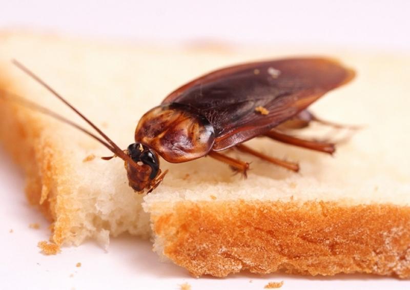 Подробно о том, как избавиться от тараканов в домашних условиях быстро, эффективно, раз и навсегда