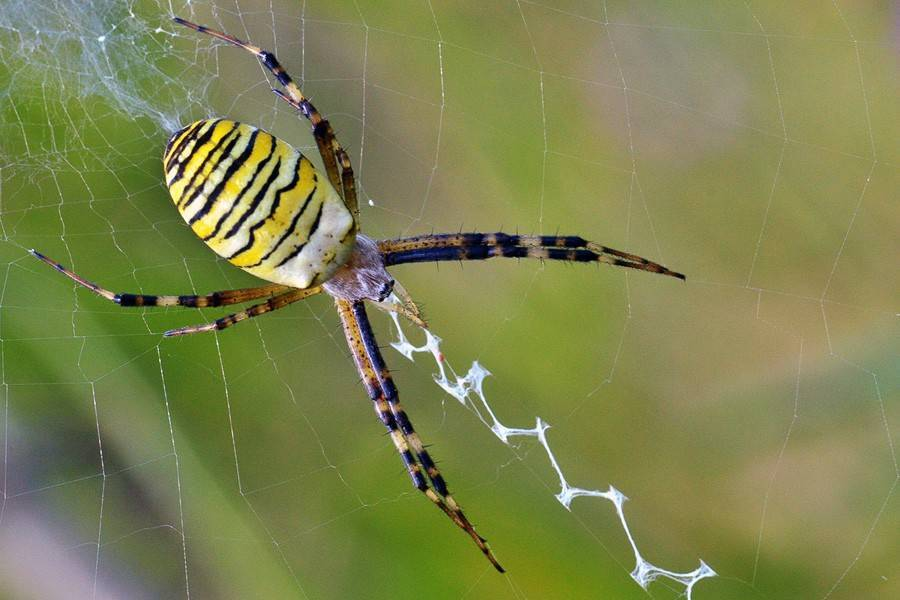 Пауки в крыму: какие ядовитые, что делать если укусил паук