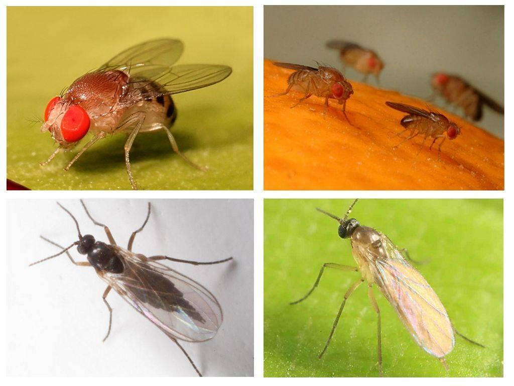 Почему в доме мухи дохнут сами по себе на пластиковых окнах