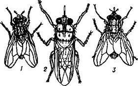 Болезнь вызванная личинками мух — parazit24