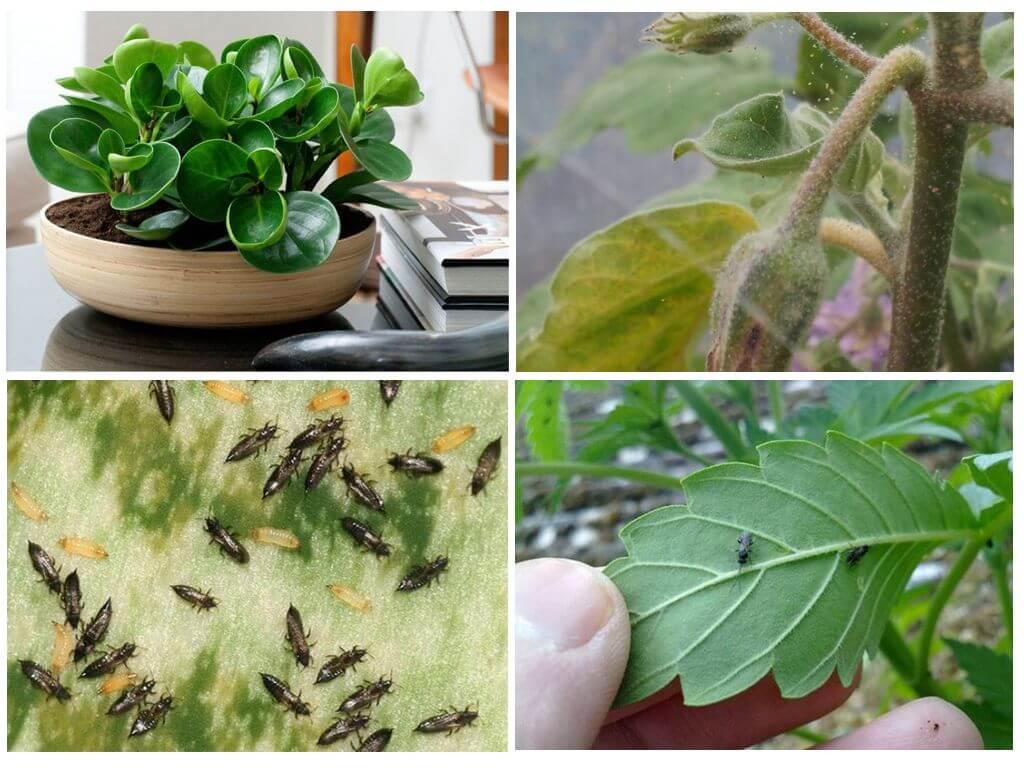 Основные вредители комнатных растений и как с ними бороться
