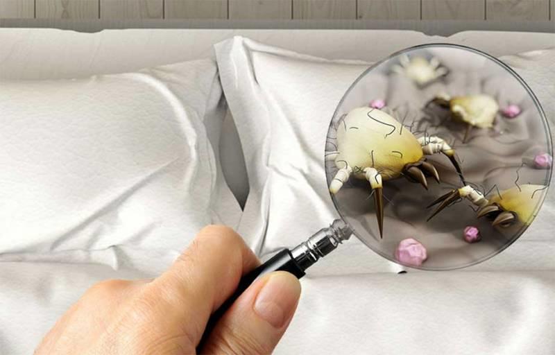 Пылевые клещи в подушках (перьевые), в постельном белье: симптомы, как избавиться от домашних клещей