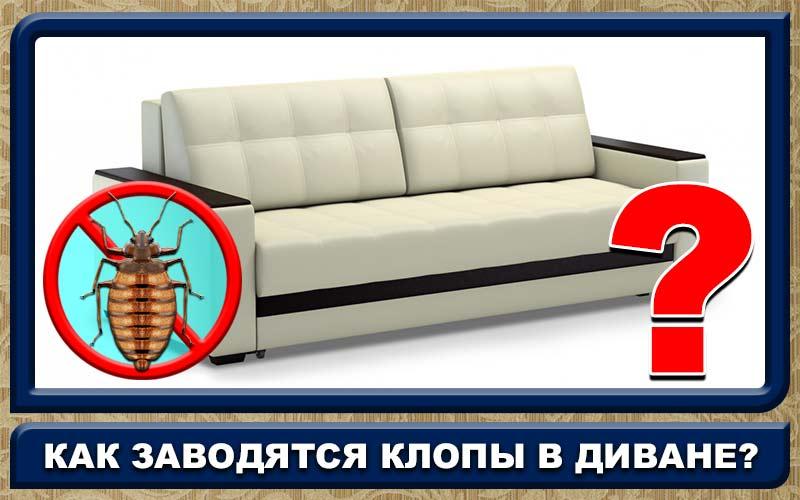 Как самостоятельно вывести клопов из дивана: 10 способов