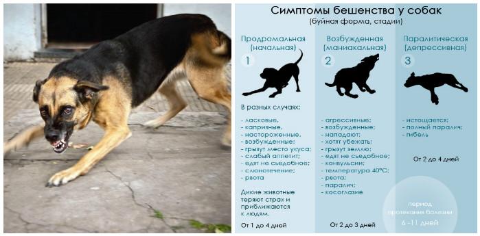 В каких случаях крысы нападают на человека   русская семерка