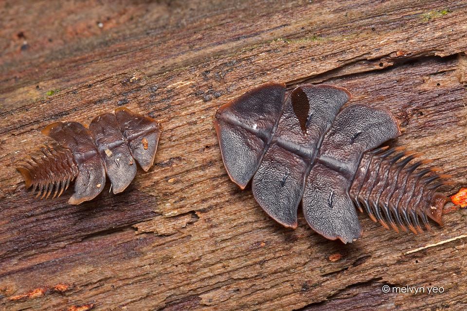 Жуки-гиганты и другие удивительные насекомые - экстремально - медиаплатформа миртесен