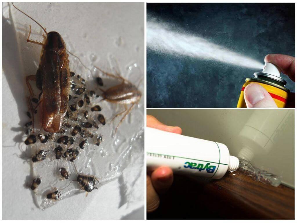 Как избавиться от тараканов в квартире навсегда: химические препараты, народные способы