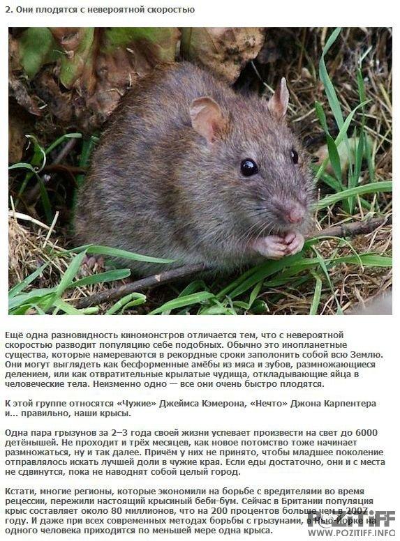 17 интересных фактов о мышах