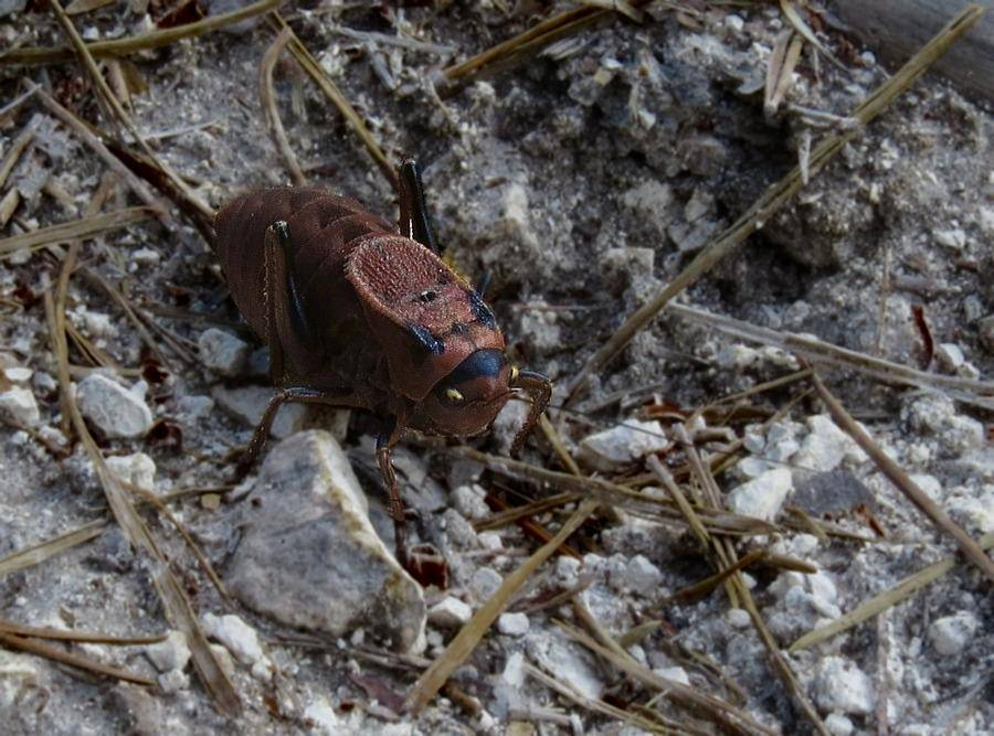 Кузнечик – виды с фото, названиями и описанием | разные виды кузнечиков