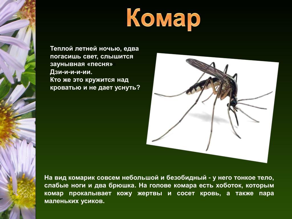 Чем питается комар? обзор предпочтений насекомого в зависимости от пола и стадии развития. комар – насекомое-кровопийца что едят комары самцы