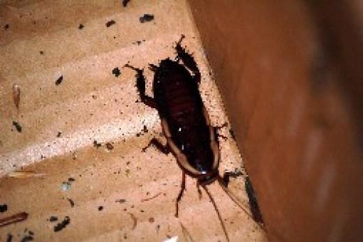 Чего боятся тараканы: борьба с насекомыми в квартире