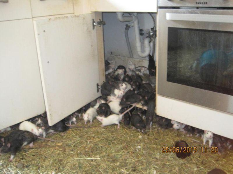 Как избавиться от мышей в квартире и частном доме без кошки