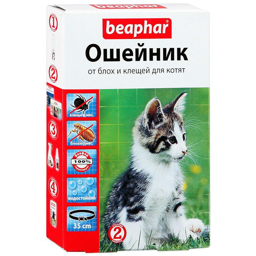 Чем можно уничтожать блох у котят самого разного возраста: инструкция для владельцев