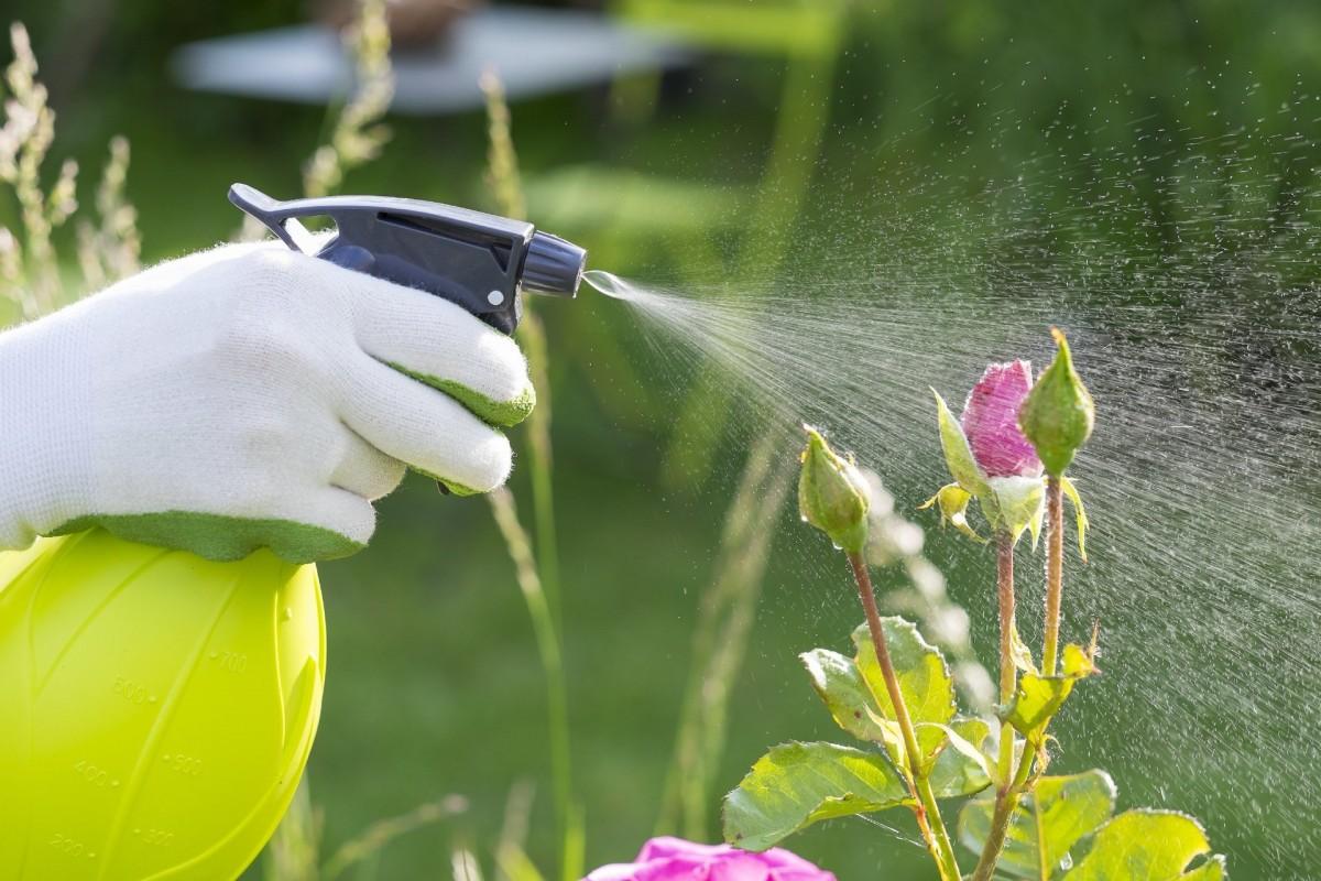 Белая тля: как бороться на комнатных растениях, фото вредителя, нюансы обработки орхидей в домашних условиях, а также как избавиться от насекомого на цветах в саду? selo.guru — интернет портал о сельском хозяйстве