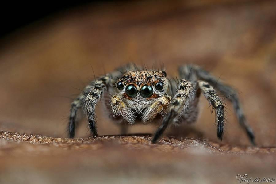 Самые красивые пауки мира
