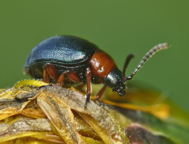 Самые полезные насекомые: топ-10 с фото