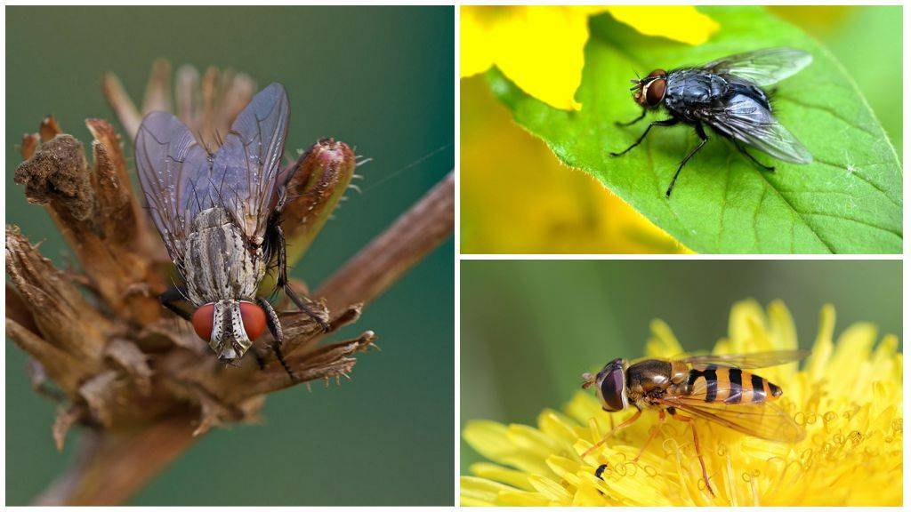 Укусы насекомых: примеры укусов с фото, кто укусил и как оказать первую помощь