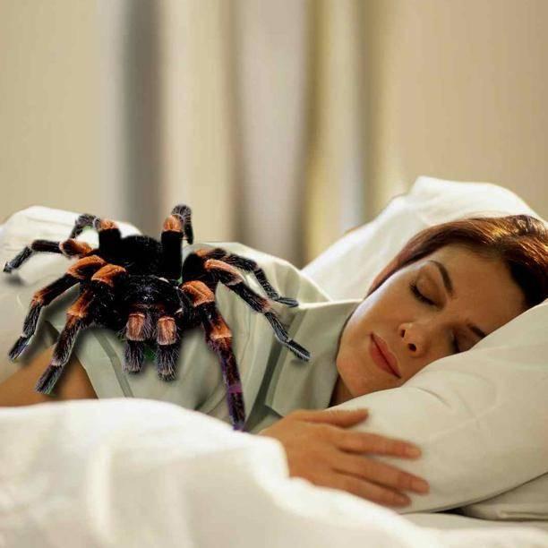 Энтомофобия: основная симптоматика, боязнь насекомых и пауков
