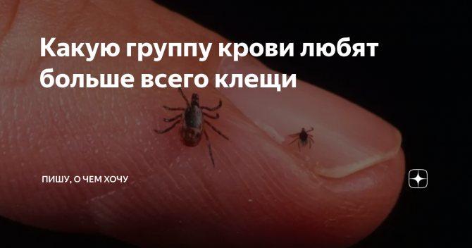 Какую группу крови любят комары и почему кусают не всех