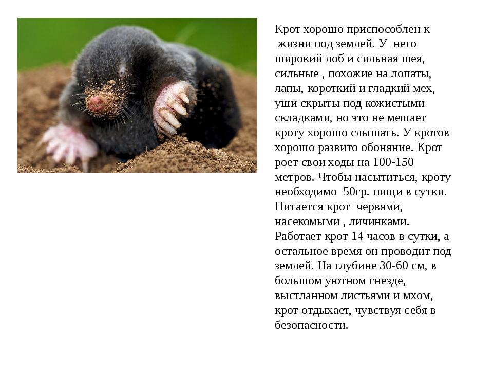 Кроты (лат. talpidae)