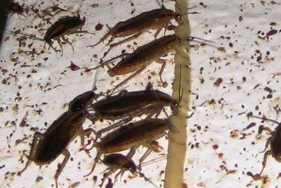 Что делать, если в квартире завелись тараканы