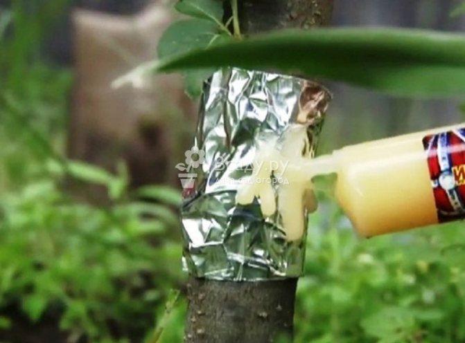 Как быстро вывести муравьев с пионов: самодельные ловушки, борная кислота и нашатырный спирт