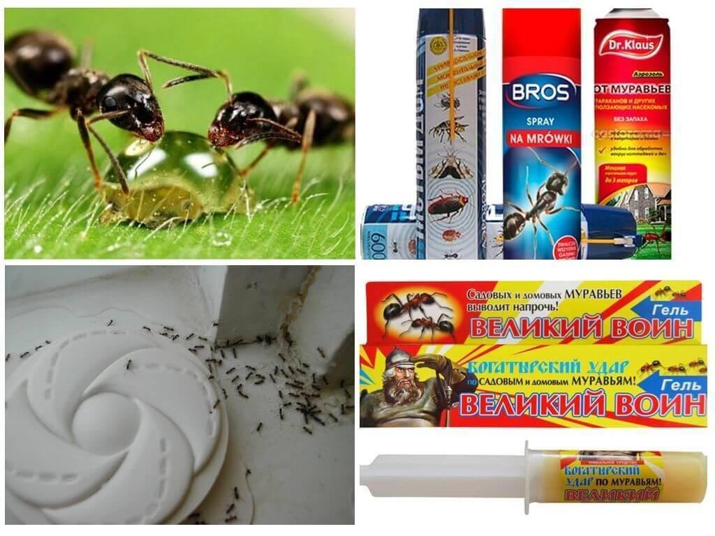 Как избавиться от муравьев на кухне - самые эффективные народные средства, химические препараты и ловушки